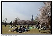 080405 新宿御苑 櫻花樹下野餐:DSC_1859.jpg