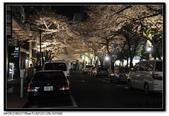 080405 新宿御苑 櫻花樹下野餐:DSC_2115.jpg