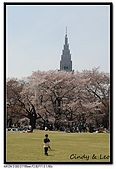 080405 新宿御苑 櫻花樹下野餐:DSC_1861.jpg