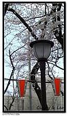 080327 上野恩賜公園 櫻花直擊:CIMG6079.jpg