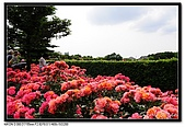 080607 京成玫瑰園:DSC_2867.jpg