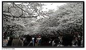 080327 上野恩賜公園 櫻花直擊:CIMG6080.jpg