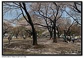 080405 新宿御苑 櫻花樹下野餐:DSC_1868.jpg