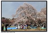 080405 新宿御苑 櫻花樹下野餐:DSC_1871.jpg