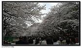 080327 上野恩賜公園 櫻花直擊:CIMG6083.jpg