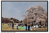 080405 新宿御苑 櫻花樹下野餐:DSC_1872.jpg