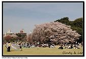 080405 新宿御苑 櫻花樹下野餐:DSC_1875.jpg