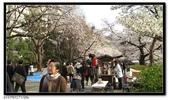 080327 上野恩賜公園 櫻花直擊:CIMG6350.jpg