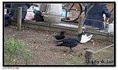 080327 上野恩賜公園 櫻花直擊:CIMG6089.jpg