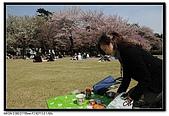 080405 新宿御苑 櫻花樹下野餐:DSC_1878.jpg