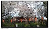 080327 上野恩賜公園 櫻花直擊:CIMG6354.jpg