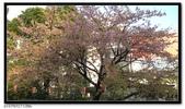 080327 上野恩賜公園 櫻花直擊:CIMG6359.jpg