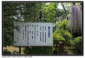 080429 埼玉 牛島の藤:DSC_2163.jpg