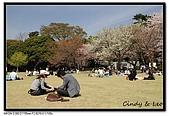 080405 新宿御苑 櫻花樹下野餐:DSC_1883.jpg