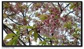 080327 上野恩賜公園 櫻花直擊:CIMG6363.jpg