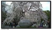 080327 上野恩賜公園 櫻花直擊:CIMG6366.jpg