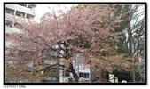 080327 上野恩賜公園 櫻花直擊:CIMG6375.jpg