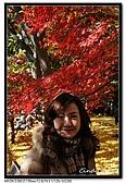 071209 新宿御苑、自由之丘、東京鐵塔:DSC_0050.jpg