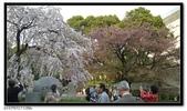 080327 上野恩賜公園 櫻花直擊:CIMG6376.jpg