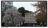 080327 上野恩賜公園 櫻花直擊:CIMG6377.jpg