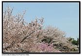 080405 新宿御苑 櫻花樹下野餐:DSC_1909.jpg