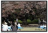 080405 新宿御苑 櫻花樹下野餐:DSC_1912.jpg
