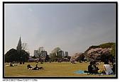 080405 新宿御苑 櫻花樹下野餐:DSC_1939.jpg