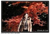 071209 新宿御苑、自由之丘、東京鐵塔:DSC_0070.jpg