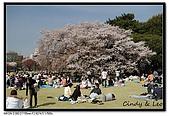 080405 新宿御苑 櫻花樹下野餐:DSC_1947.jpg