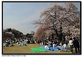 080405 新宿御苑 櫻花樹下野餐:DSC_1949.jpg