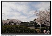 080329 東京櫻花盛開了:DSC_1505.jpg