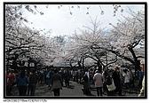 080329 東京櫻花盛開了:DSC_1519.jpg