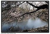 080405 新宿御苑 櫻花樹下野餐:DSC_1962.jpg