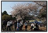 080405 新宿御苑 櫻花樹下野餐:DSC_1965.jpg