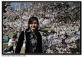 080405 新宿御苑 櫻花樹下野餐:DSC_1967.jpg