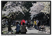 080405 新宿御苑 櫻花樹下野餐:DSC_1971.jpg
