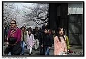 080329 東京櫻花盛開了:DSC_1533.jpg