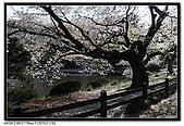 080405 新宿御苑 櫻花樹下野餐:DSC_1975.jpg