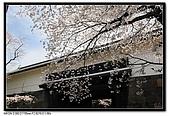 080329 東京櫻花盛開了:DSC_1536.jpg