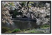 080405 新宿御苑 櫻花樹下野餐:DSC_1976.jpg