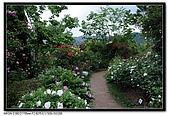 080615 河口湖 音樂森林:DSC_2982.jpg
