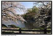 080405 新宿御苑 櫻花樹下野餐:DSC_1977.jpg