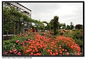 080607 京成玫瑰園:DSC_2730.jpg