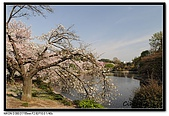 080405 新宿御苑 櫻花樹下野餐:DSC_1979.jpg