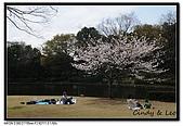 080329 東京櫻花盛開了:DSC_1546.jpg