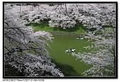080329 東京櫻花盛開了:DSC_1559.jpg