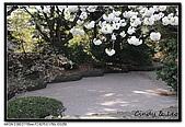 080405 新宿御苑 櫻花樹下野餐:DSC_1981.jpg