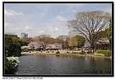 080329 東京櫻花盛開了:DSC_1560.jpg