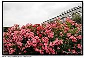 080607 京成玫瑰園:DSC_2733.jpg