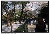 080405 新宿御苑 櫻花樹下野餐:DSC_1995.jpg